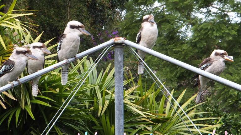 Backyards visitors